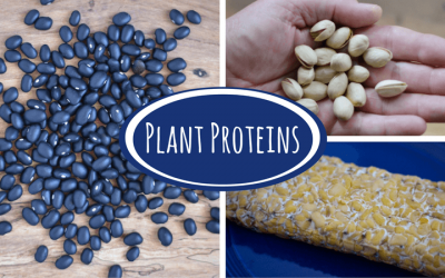 Plant Proteins: Your Questions Answered